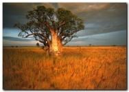 terapia gestalt madrid baoba